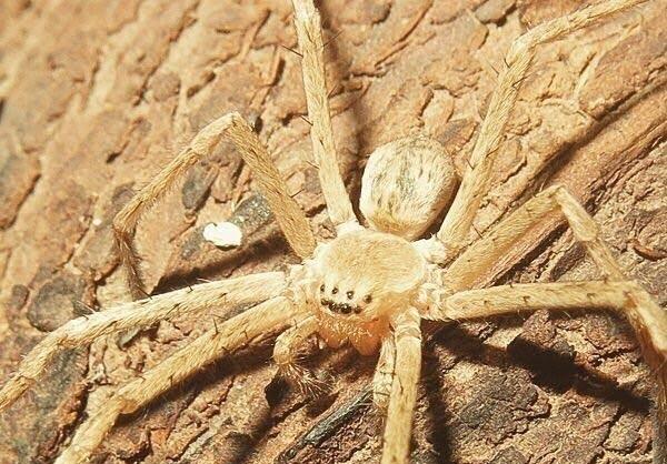 نامگذاری عنکبوت بومی به نام رامبد جوان
