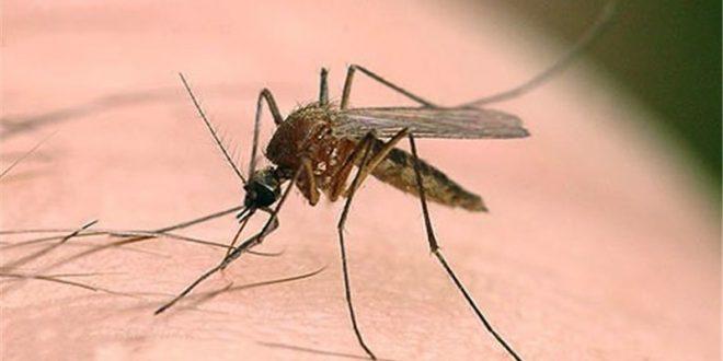 بیماریهای منتقله از پشه به انسان در گیلان وجود ندارد